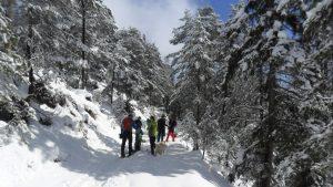 Einfach Winter in Tirol