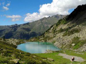 Einfach Sommer in Tirol