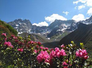 Wandern durch Rhododendronblüte